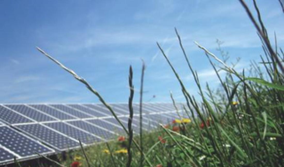 Parc solar fotovoltaic de connexió a xarxa de 2,5 MW a Sant Feliu de Buixalleu. (Girona)